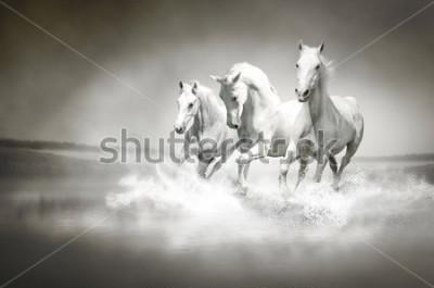 Картина Стадо белых лошадей бежит по воде