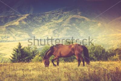 Картина Лошади пасутся на фоне гор. Осенний пейзаж Отфильтрованное изображение: крест обработанный винтажный эффект.