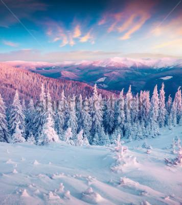Картина Фантастический зимний рассвет в Карпатах со снежными деревьями. Красочная внешняя сцена, концепция торжества с новым годом. Художественный стиль после обработки фото.