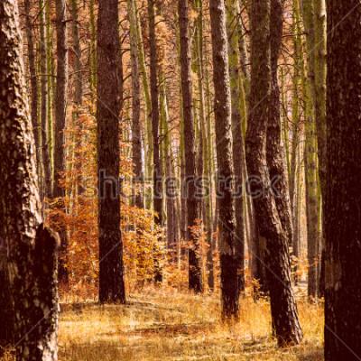 Картина фантастическая золотая осень в сосновом бору ярко-оранжевых растений