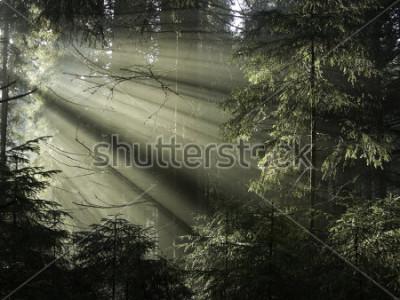 Картина Солнечный свет сквозь деревья