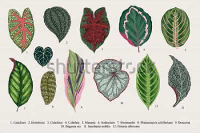 Картина Установить листья. Экзотика. Винтаж Векторный ботанические иллюстрации. Красочный.