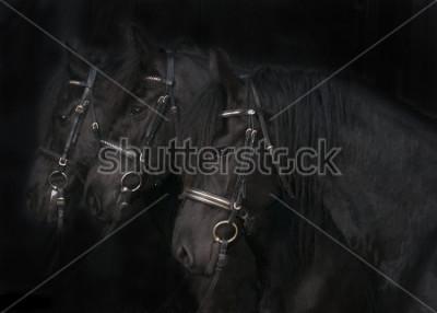 Картина Фризские Лошади
