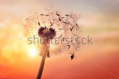 Картина Одуванчик силуэт на закате с семенами, дует ветер