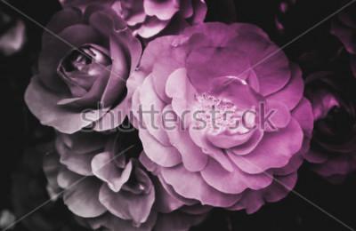 Картина Красивый цветок розы цветущие цветы. На фото изображен нежный яркий куст дикой розы. Крупным планом, макро вид. Черное и белое