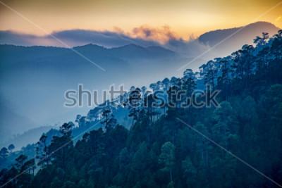 Картина Beautiful view of Foggy pine forest and sunrise at himalaya range, Almora, Ranikhet, Uttarakhand, India.
