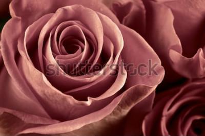 Картина Пук марсалы покрасил розовые цветки конец-вверх как предпосылка. Мягкий фокус, неглубоко ФО. Отфильтрованное изображение.