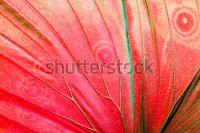 Картина Детальное фото макроса красного тропического крыла бабочки