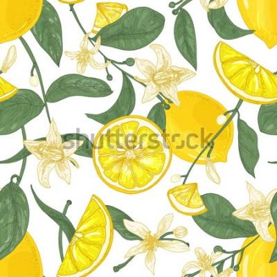 Картина Безшовная картина с свежими сочными лимонами, целыми и нарезанными на части, цветками и листьями на белой предпосылке. Фон с цитрусовыми. Ботанический векторные иллюстрации в античном стиле для обоев.