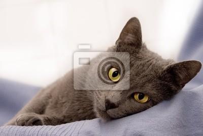 Картина кошка 04