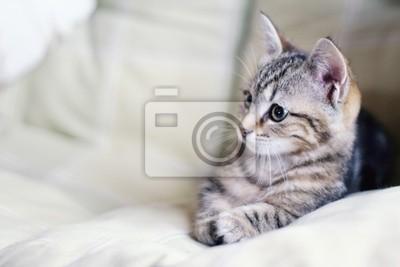 Картина кошка 2