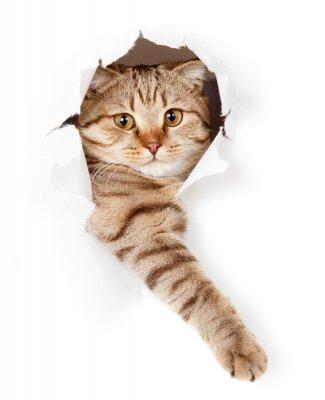 Картина кот в белом обои отверстие