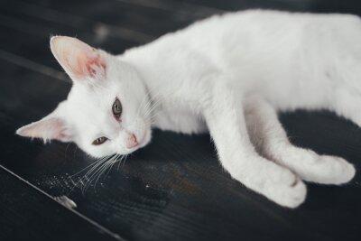 Картина кот котенок маленький мягкий белый фон внутри