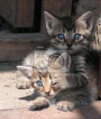 Картина кошки