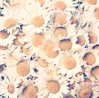 Картина Ромашки цветы - винтажном стиле