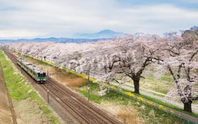 Картина Вишни в цвету или Сакура и местный поезд