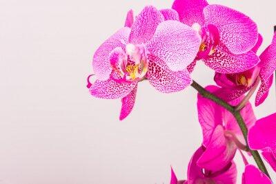 Картина Крупным планом орхидеи цветут