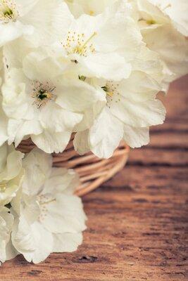 Картина Крупным планом белого цветения вишни в корзине в стиле винтаж