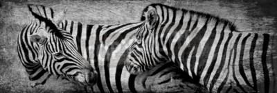 Картина Крупным планом зебры пасутся на сухом лугу