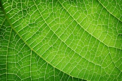 Картина Крупным планом зеленых листьев
