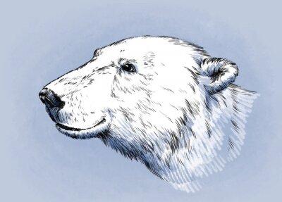 Картина цвет выгравировать изолированный вектор медведь