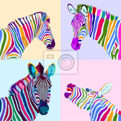 colorful set zebra pop art portrait vector ilustration can be used to design for T-shirt, card, poster, invitation. Vector illustration
