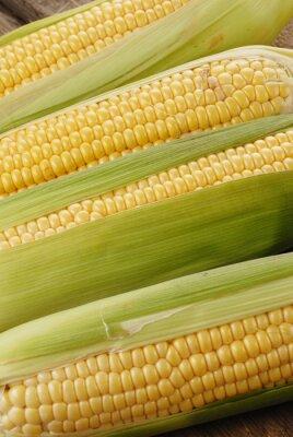 Картина початки кукурузы