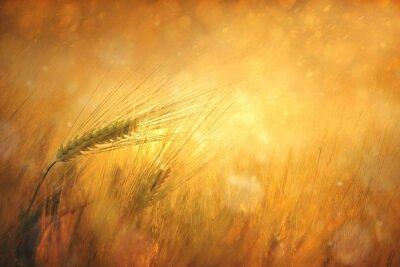 Картина Деревня Солнечный Пшеничное поле фантазии фон