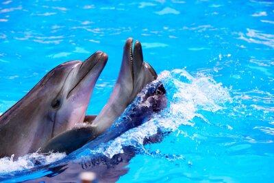 Пара дельфина в голубой воде.
