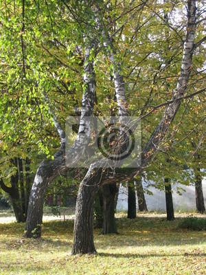решительно вечером солнце и мощные сочные зеленые деревья в парке