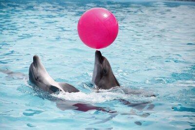 Картина милые дельфины во время выступления в дельфинарии