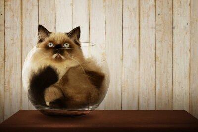 Картина Симпатичные персидский кот внутри стеклянной миске