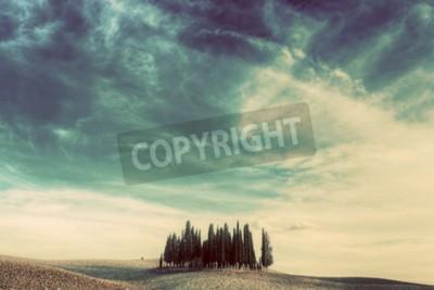 Картина Кипарисов на поле в Тоскане, Италия на закате. Тосканский пейзаж в винтажном, ретро-настроение