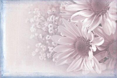 Картина ромашка букет с пастель розовый наложения текстуры и синей рамкой