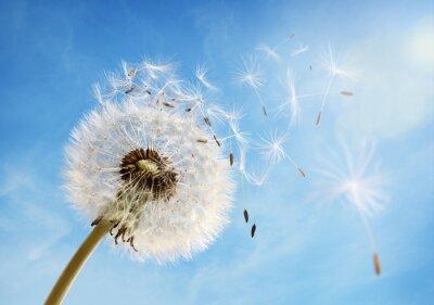 Картина Одуванчик часы диспергирующие семян