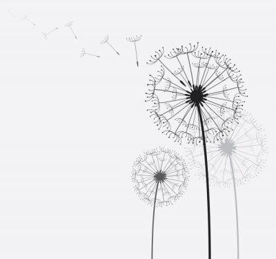 Картина Одуванчик / одуванчик на ветру