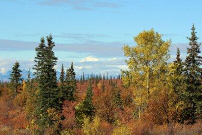 Картина Денали Nationalpark им Herbst