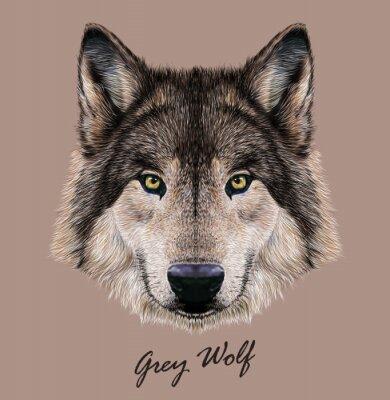 Картина Цифровые векторные иллюстрации Портрет волка.