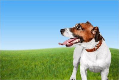 Картина Собака.