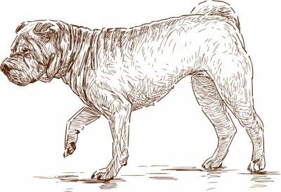 Картина собака на прогулке