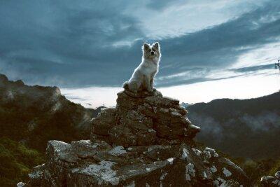Картина Собака сидит на скале в горах