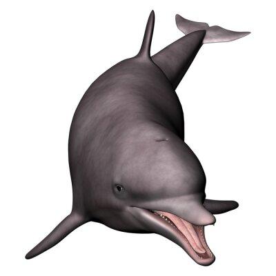 Картина Дельфин