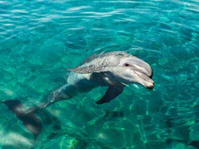 Картина Дельфин улыбается, как Мона Лиза