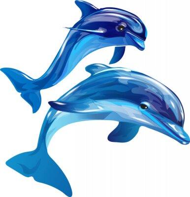 Картина дельфины белые