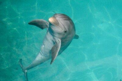 Картина Доминиканская Республика Дельфин