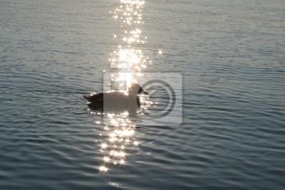 Ente Beim Sonnenuntergang