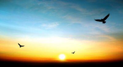 Картина орел летит в небе красивый закат