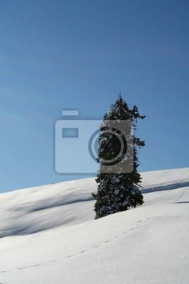Einsamer Baum в tiefschnee