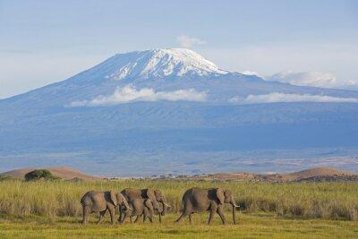 Картина Elefanten мит Kilimandscharo