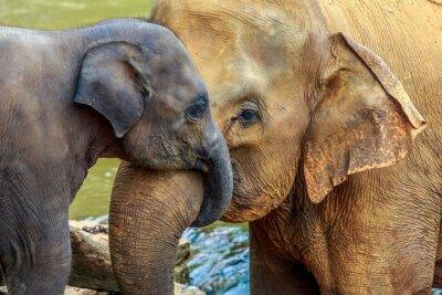Картина elephant and baby elephant
